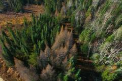 ForestAutumn